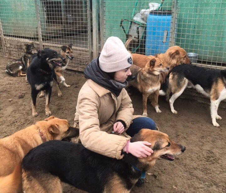 Волонтеры в приюте для животных