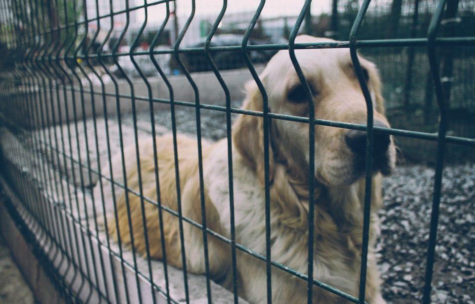Как помочь приюту для животных?