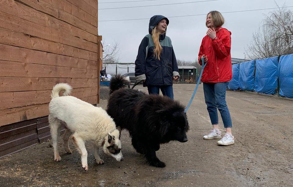 Волонтеры из ИИЯ снова навестили животных в приюте