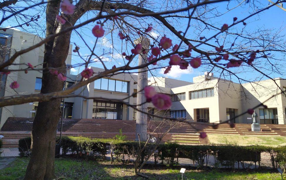 Именная стипендия и возвращение из Японии в период пандемии