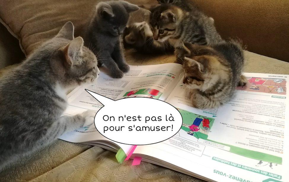 Дистант ИИЯ: учим французский с домашними питомцами