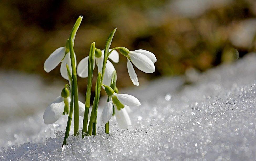 Поздравляем юбиляров иименинников марта